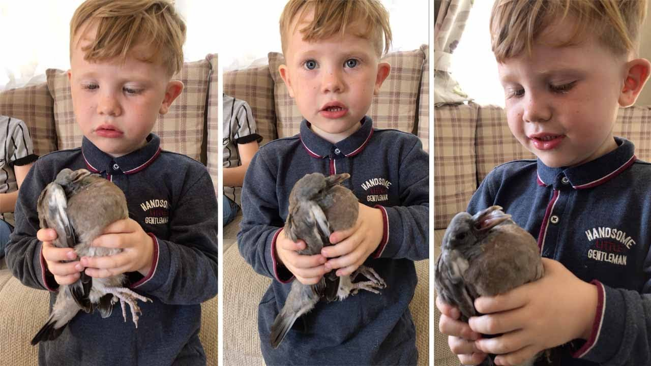 Adorable Kid Asks Mum If He Can Keep A Pigeon 2