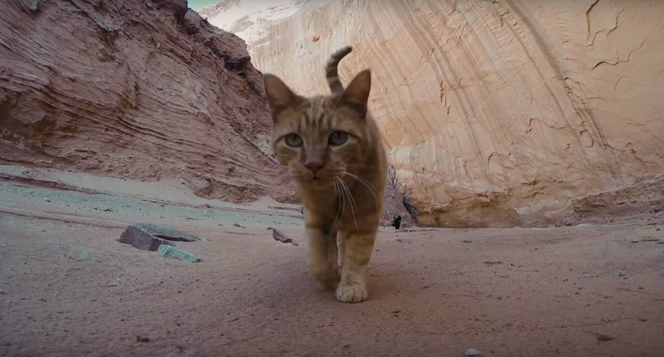 Canyon Cats Embark On Epic Utah Adventure 6