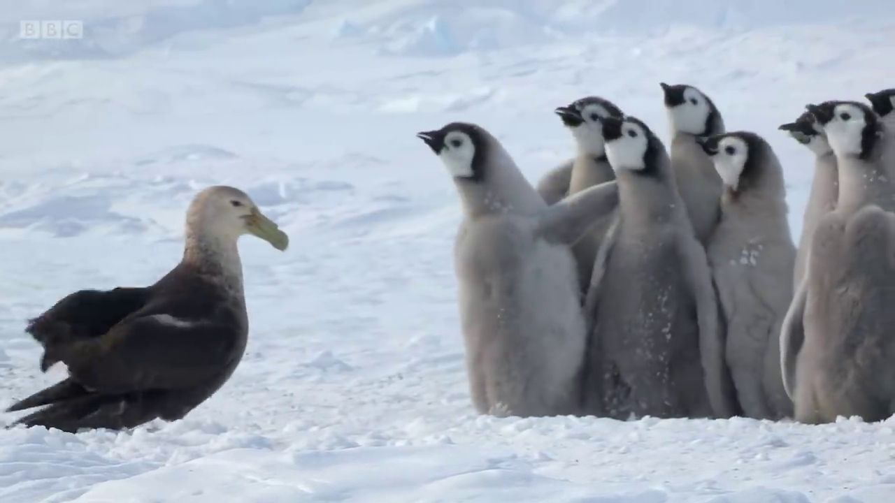 Baby Penguins Get Rescued By An Unlikely Hero 9