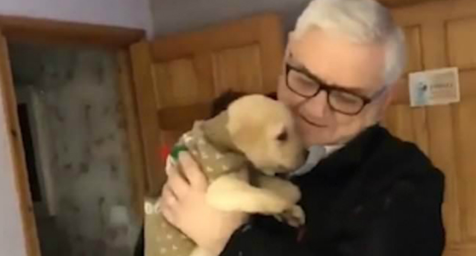 Grieving Grandfather Gets A Labrador Puppy For Christmas 2