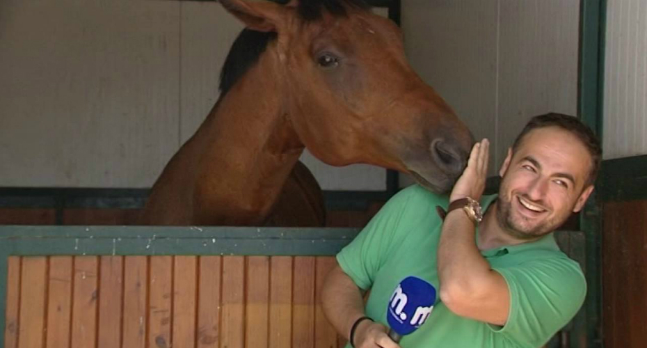 Horse Falls In Love With TV Reporter 4