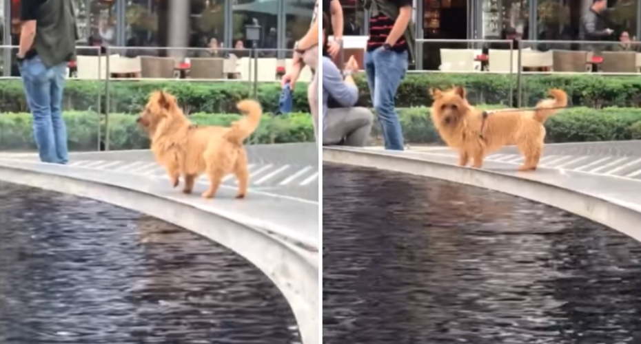 This Adorable Dog Is All Of Us When We Have No Idea What's Going On 1