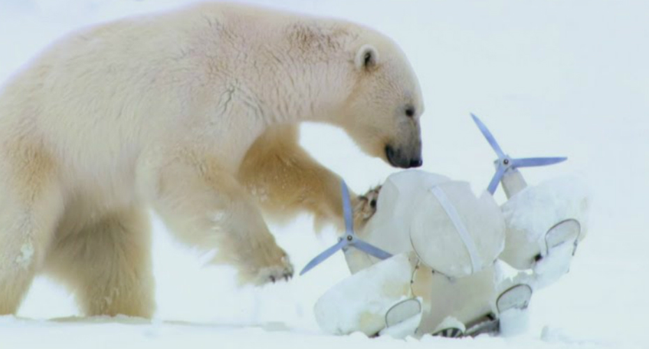 Trio Of Teenage Polar Bears Kick A Snowball Shaped Camera Around In Between Playful Bouts Of Fighting 8