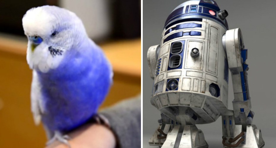 Budgie Talks Like R2-D2 In Star Wars 5