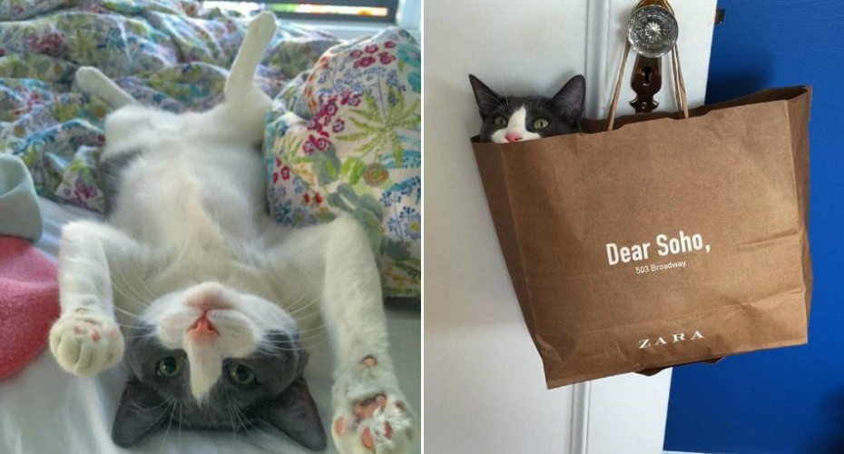 Cat Rejected By Five Owners Finally Finds Someone That Loves Her 5