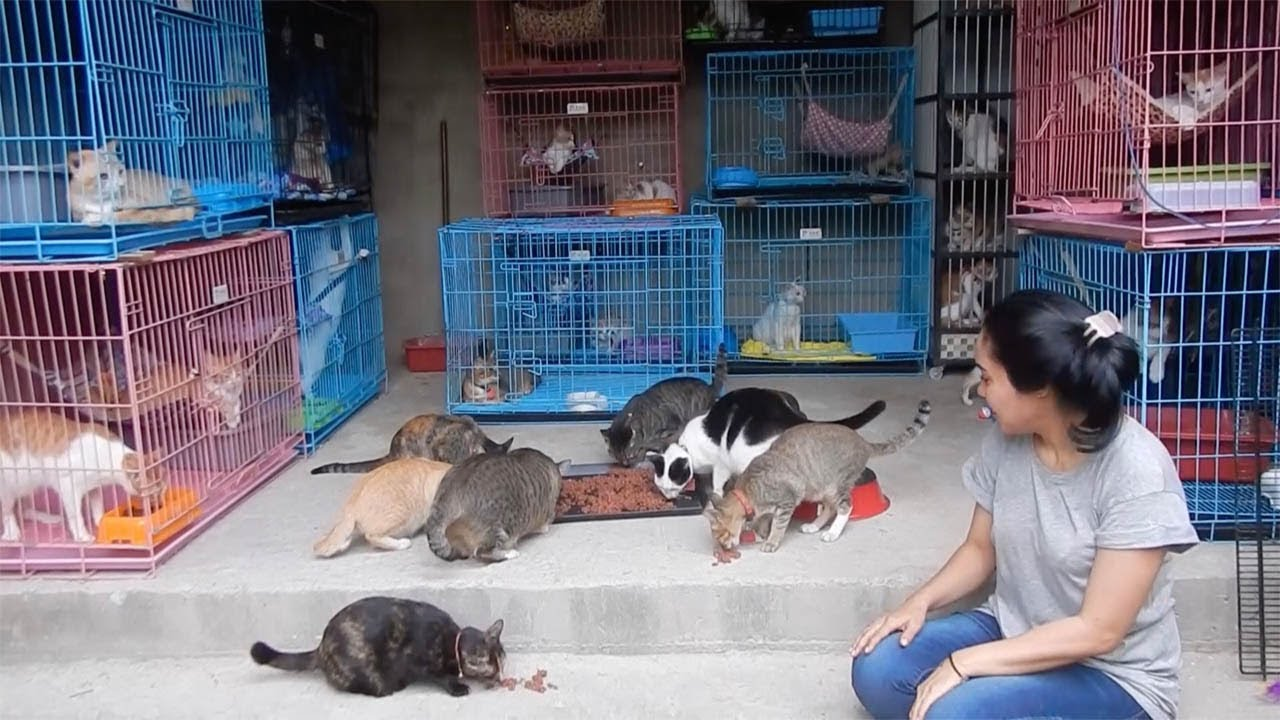 Indonesian Woman Rescues Abandoned Cats 3