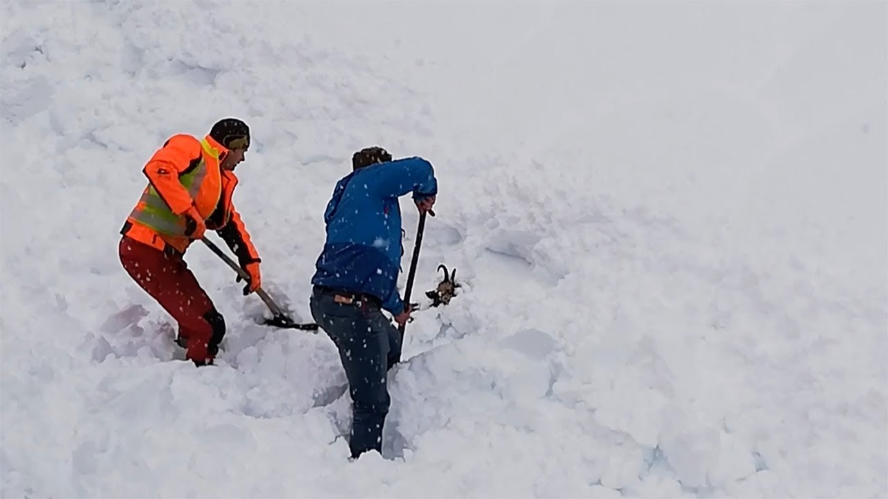Railway Workers Save Goat Buried In Snow 2