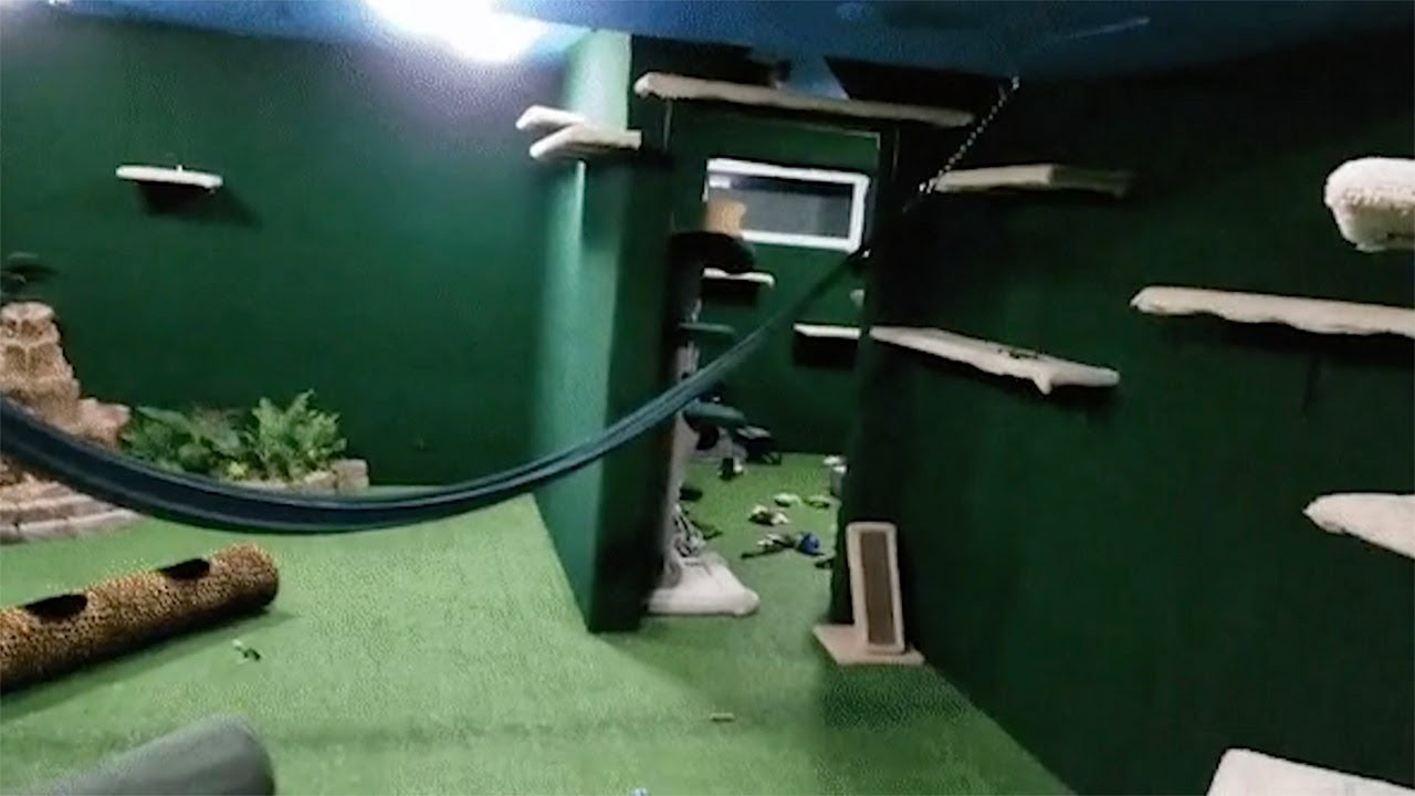 Man Turns Basement Into Ultimate Cat Jungle 9