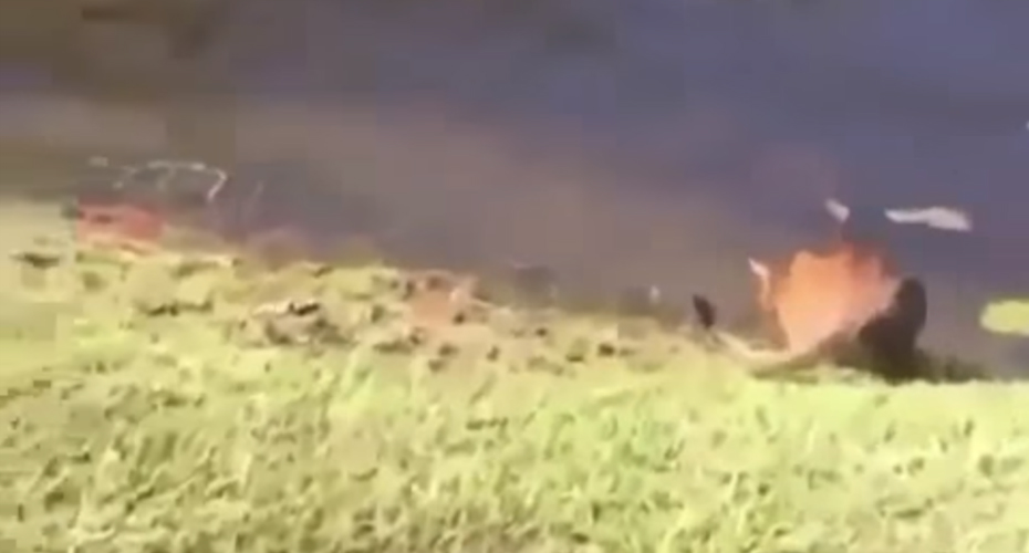 Sneeze Scares A Cat Into Jumping Into A Lake 5