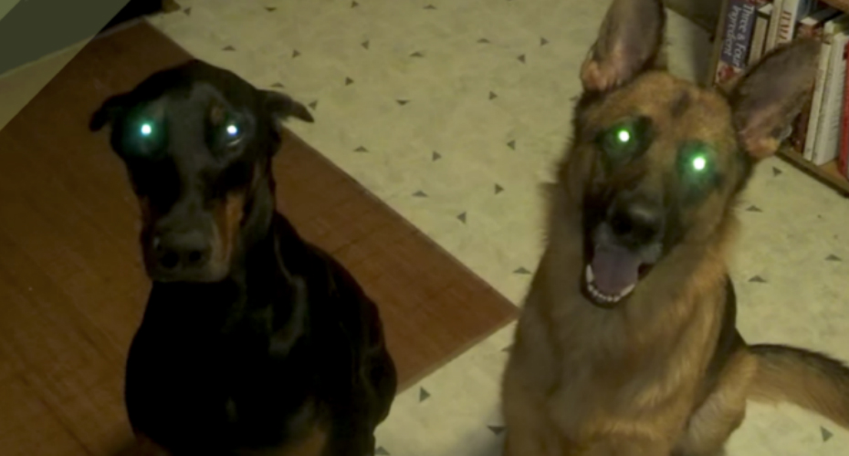 These 2 Dogs Reacted Hilariously When Caught Chewing Underwear 2