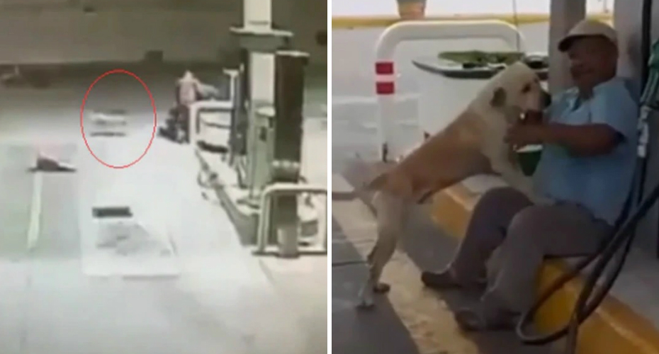 Stray Dog Adopted By Gas Station Rushes To The Rescue During Armed Robbery 3
